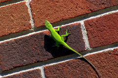Free Green Lizard Stock Photography - 1361322