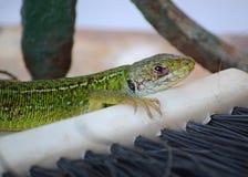 Green lizard on the balcony floor stock photo