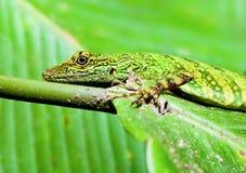 Green Lizard Camouflage Stock Photos