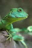 Green Lizard close-up Stock Images