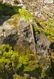 Green lizard is on the green rock Stock Photo