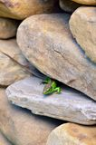 Green lizard hidding Stock Images