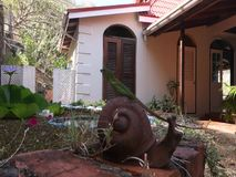 A green lizard hunting beside a fish pond in the tropics. A reptilian creature perched on a garden ornament in the caribbean stock video footage