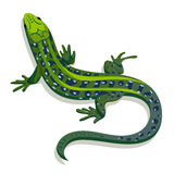 Green lizard,  illustration Stock Image