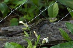 Green lizard on a log Stock Photo