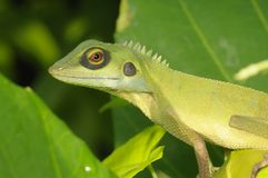 Green lizard in the park Royalty Free Stock Image