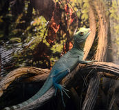 Green lizard rests on a tree Stock Photo