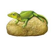 Green lizard on a stone Royalty Free Stock Images