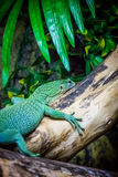 Green lizard in a zoo Stock Photography