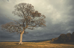 Green lonely tree growing in the Lyme Park, England. Green lonely tree growing in the Lyme Park, England stock photo