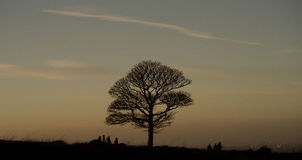 Green lonely tree growing in the Lyme Park, England.  stock image