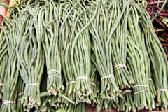 Green long beans Stock Images