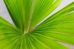 Green Long Leaves Plant Wallpaper. Natural Green Long Leaf Small Plant Closeup in Garden. Best Nature Wallpaper Background Image Royalty Free Stock Images