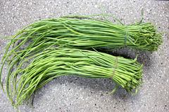 Green long rat-tail radish pods Stock Images