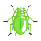 Green longhorn beetle colorful cartoon character Stock Photography