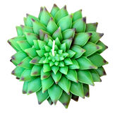 Green lotus isolated Royalty Free Stock Images