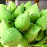 Green lotus. For prayer Royalty Free Stock Image