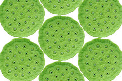 Green Lotus seed pods on white background Royalty Free Stock Photo