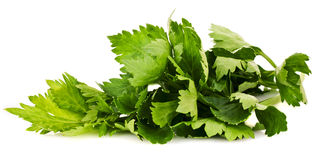 Green lovage Royalty Free Stock Images