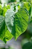 Green Love Stock Photos