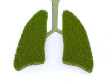 Green lung Royalty Free Stock Photography