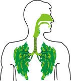 Green lung - a breath of fresh air. Lung lobes, to gasp for breath, fresh as a daisy Stock Image