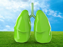 Green lungs. 3d rendering green lungs with green field and blue sky stock image