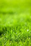 Green luscious grass Stock Images