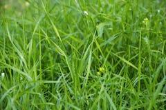 Green luscious grass Stock Photography