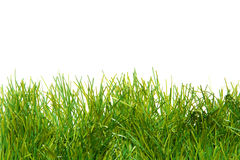 Green lush artificial grass. Over white background Stock Photography