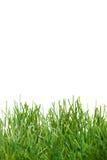 Green lush artificial grass Stock Photos