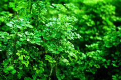 Green lush background Royalty Free Stock Images