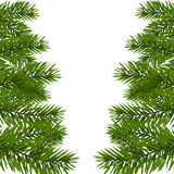 Green lush branch of spruce with the two sides. Fir branches.  on white illustration. Green lush branch of spruce with the two sides. Fir branches.  on white Stock Photos