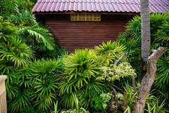 Exterior of exotic resort house. Green lush bushes surrounding small wooden house on territory of hotel on Phuket island royalty free stock photos