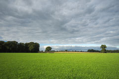 Green lush fields of Delden (Overijssel, The Netherlands). Tthe lush green fields on a cloudy summer afternoon near the small town of Delden, in the province of Royalty Free Stock Photos