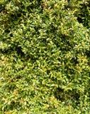 Green lush foliage Royalty Free Stock Image