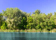 Green lush forest and the turquoise lake Royalty Free Stock Image