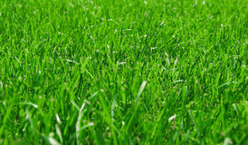 Green Lush Grass Stock Photos