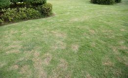 Green lush grass in a garden with bush.  stock photo