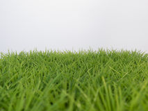 Green lush grass on the lawn on a white background Stock Images