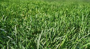 Green lush grass on a spacious field Stock Photos