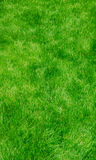 Green Lush Grass - Vertical Royalty Free Stock Image