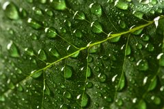 Green Lush Growth Growing Leaf with Fresh Water Drops Stock Photos