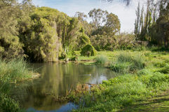 Green and Lush: Gwelup Wetlands. Calm waters with duck in the lush green landscape with native plants in the Careniup Wetlands under a blue sky in Gwelup royalty free stock images