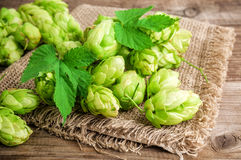 Green and lush hops Stock Photo