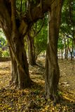 Green lush. Irigational canal in the park was drought by summer season and the big trees remain stand in green lush, intentionally blurred foreground Royalty Free Stock Images