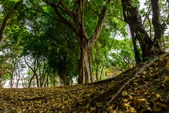 Green lush. Irigational canal in the park was drought by summer season and the big trees remain stand in green lush, intentionally blurred foreground Royalty Free Stock Photos
