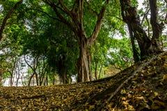 Green lush Royalty Free Stock Photos