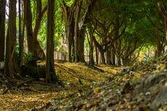 Green lush Stock Photography