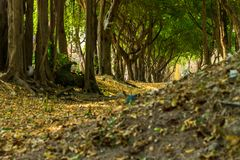 Green lush Stock Image